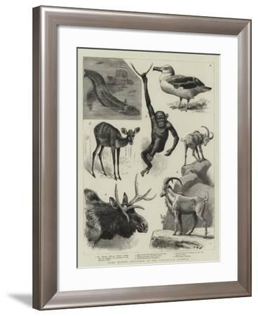 Some Recent Additions to the Zoological Gardens--Framed Giclee Print