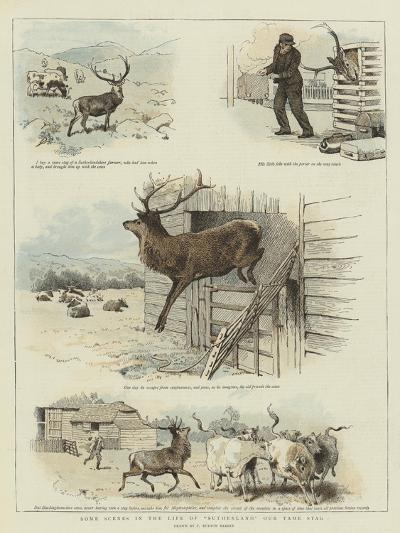 Some Scenes in the Life of Sutherland, Our Tame Stag-Charles Burton Barber-Giclee Print