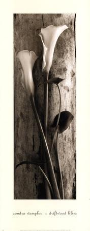 Driftwood Lilies