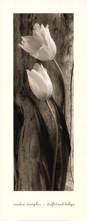 Driftwood Tulips