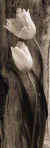 Driftwood Tulips by Sondra Wampler