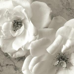 Beautiful flowers black and white photography artwork for sale poppy study iii mightylinksfo