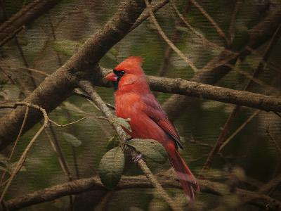 Song of the Red Bird 1-Jai Johnson-Giclee Print