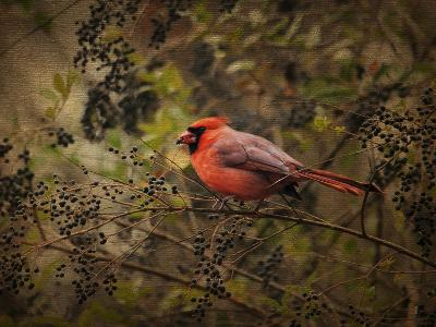 Song of the Red Bird 2-Jai Johnson-Giclee Print