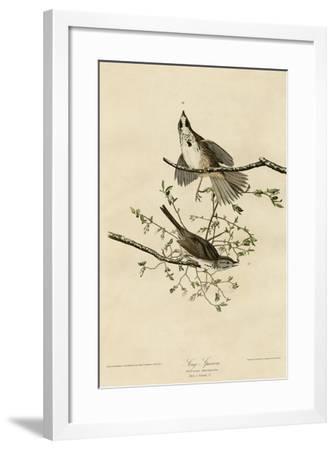 Song Sparrow--Framed Giclee Print