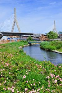 Boston Leonard P. Zakim Bunker Hill Memorial Bridge with Blue Sky in Park with Flower as the Famous by Songquan Deng