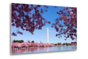 Washington Dc Cherry Blossom by Songquan Deng