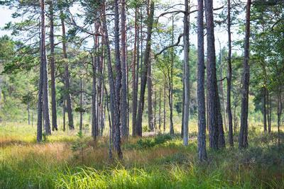 Moorlands, Raised Bog, Gnosjö