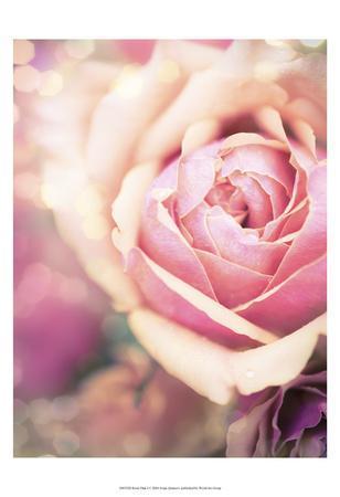 Rosie Pink I