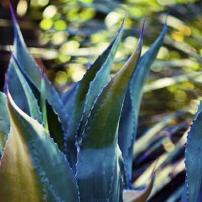 Succulent Vibes I