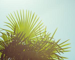 Sunny Palms I by Sonja Quintero