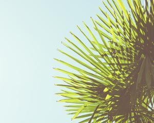 Sunny Palms II by Sonja Quintero