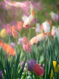 Tulip Swim A by Sonja Quintero
