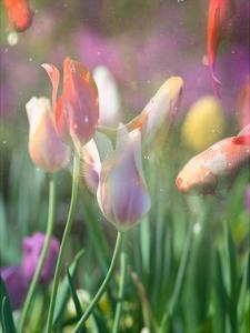 Tulip Swim B by Sonja Quintero