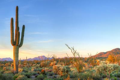https://imgc.artprintimages.com/img/print/sonoran-desert-catching-days-last-rays_u-l-q1a3lmc0.jpg?p=0