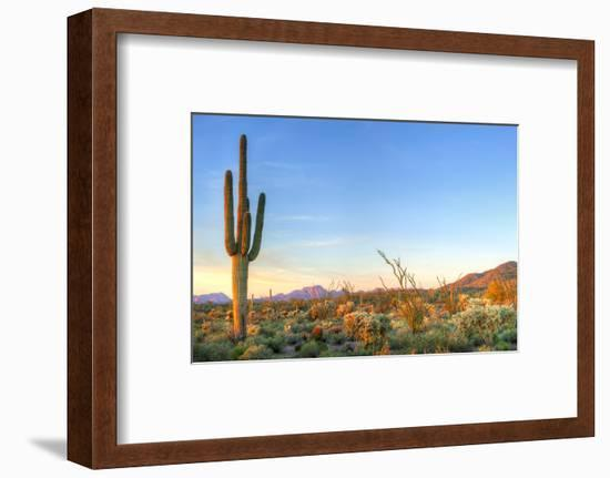 Sonoran Desert Catching Days Last Rays.-Anton Foltin-Framed Photographic Print