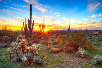 Sonoran Desert-Anton Foltin-Photographic Print