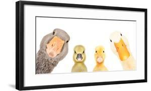 Portrait of a goose, gosling, duckling, duck isolated on a white background by Sonsedska