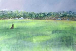 Rice Fields, Goa, India, 1997 by Sophia Elliot