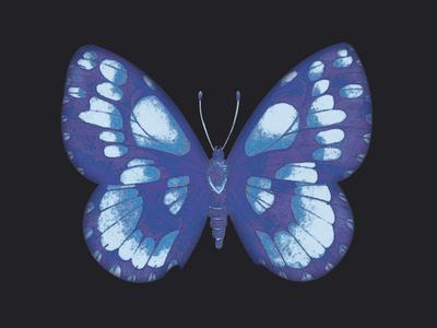Summer Butterfly I