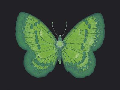 Summer Butterfly III
