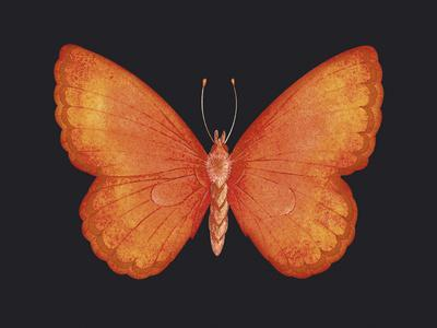 Summer Butterfly V