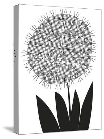 Graphic Allium