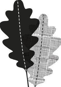 Graphic Oak by Sophie Ledesma