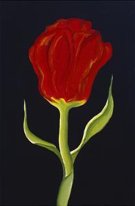 Red Tulip by Soraya Chemaly