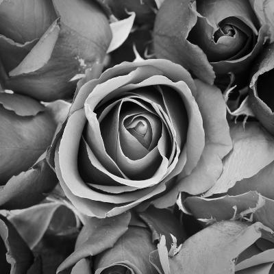Sorrow Rose-zirconicusso-Art Print