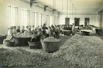 Sorting Roses, from 'Industrie Des Parfums a Grasse', C.1900--Photographic Print