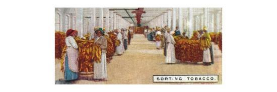'Sorting Tobacco', 1926-Unknown-Giclee Print