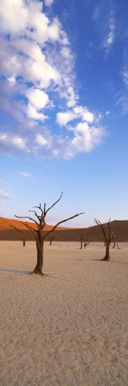 Sossusvlei, Namib-Naukluft Park, Namibia, Africa-Gavin Hellier-Photographic Print