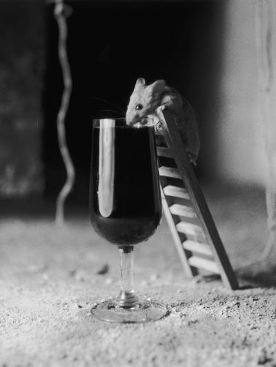 Soused Mouse-Charles Hewitt-Photographic Print