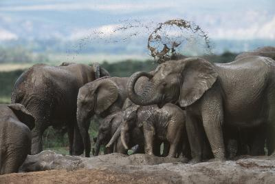 South Africa, Addo Elephant National Park, Elephant in the Mud at Water Hole-Paul Souders-Photographic Print