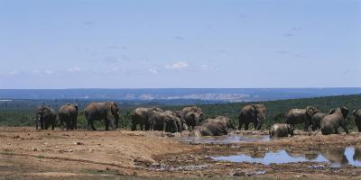 South Africa, African Elephant in Addo Elephant National Park-Paul Souders-Photographic Print