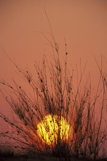 South Africa Dune with Dune Grass at Sunset--Photographic Print