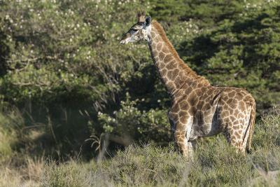 South Africa, Eastern Cape, East London. Inkwenkwezi Game Reserve-Cindy Miller Hopkins-Photographic Print