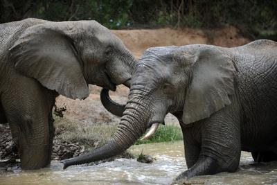 https://imgc.artprintimages.com/img/print/south-africa-elephants-november-29-2009-in-zuurberg_u-l-pt8bbp0.jpg?p=0