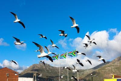 South Africa, Hout Bay, Gulls-Catharina Lux-Photographic Print