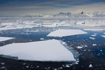 South Antarctic Circle, Near Adelaide Island. the Gullet. Ice Floes-Inger Hogstrom-Photographic Print