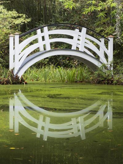 South Carolina, Charleston, Magnolia Plantation. Arching Bridge-Don Paulson-Photographic Print