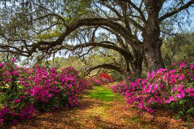 South Carolina Spring Flowers Charleston SC Lowcountry Scenic Nature Landscape with Blooming Pink A-Dave Allen Photography-Photographic Print