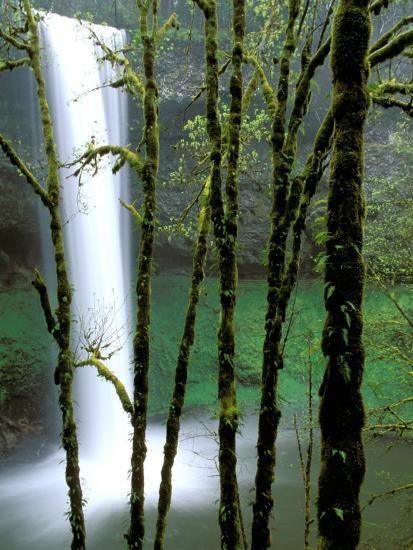 South Falls, Silver Falls State Park, Oregon, USA-Jamie & Judy Wild-Photographic Print