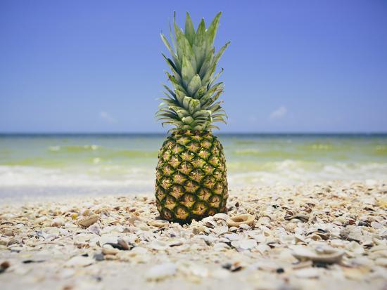 South Florida Pineapple II-Adam Mead-Photographic Print