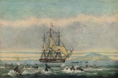South Sea Whale Fishery, 1825-Thomas Sutherland-Giclee Print