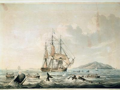 South Sea Whale Fishery, Engraved by T. Sutherland, 1825-William John Huggins-Giclee Print