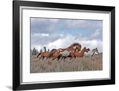 South Steens Mustangs-Larry McFerrin-Framed Photo
