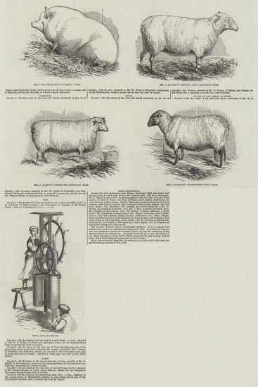 Southampton Meeting of the Royal Agricultural Society of England--Giclee Print