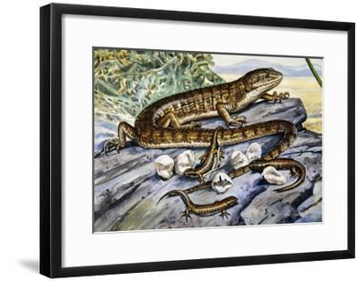 Southern Alligator Lizard (Elgaria Multicarinata), Anguidae--Framed Giclee Print